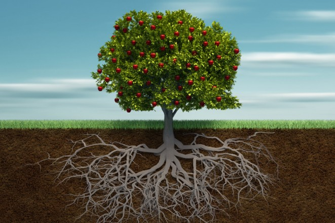 9-Must-Knows-Before-Planting-Fruit-Trees-4-661x441